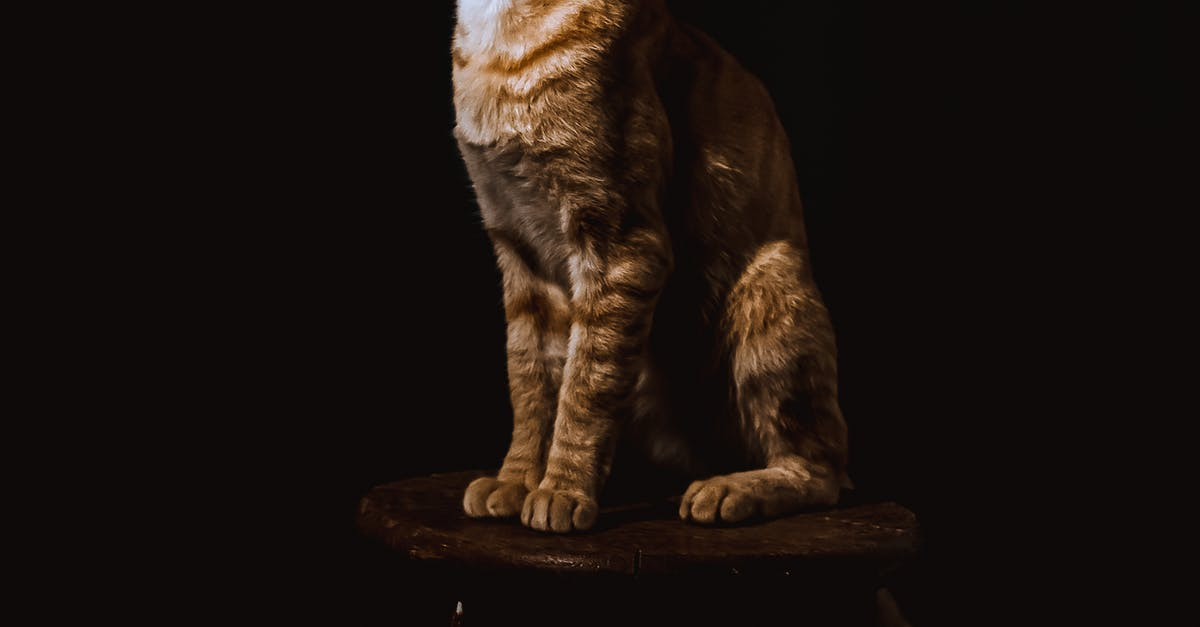 A cat that is standing in the dark